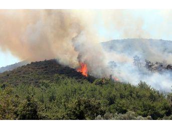 Bodrum'da Korkutan Yangın