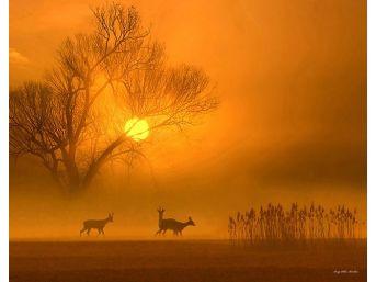 Doğaya Olan Tutkunun Sergisi 'renkleri Ve Işığın Dans' Bodrum'da Açıldı