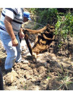Su Borusundan 26 Metrelik Ağaç Kökü Çıktı