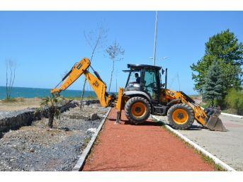 Alaplı Sahili Ağaçlandırılıyor