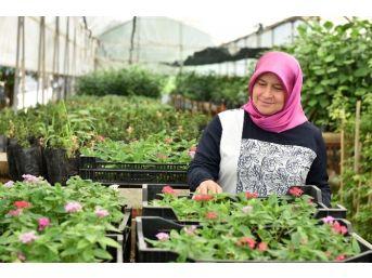 Kepez Belediyesi Kendi Bitkisini Kendisi Üretiyor