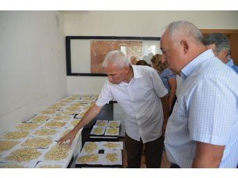 Kayseri Şeker'in Çerezlik Kabak Islahı Projesinde Tohumluk Kabak Çalışmasına Başlandı