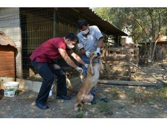 Konyaaltı Belediyesi'nden Ölüme Terk Edilen Köpeklere Yardım Eli