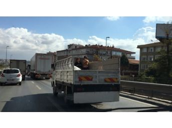 (özel Haber) Çocukların Kamyonet Kasasındaki Tehlikeli Yolculuğu Kamerada