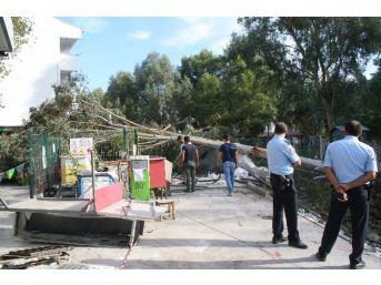 İş Makinesinin Köklediği Ağaç Benzin İstasyonuna Devrildi