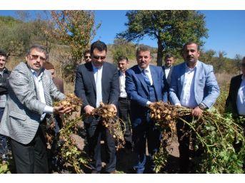Türkiye'nin İlk 'beyaz Patates' Hasadı Yapıldı