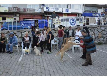 Hayvanları Koruma Günü'nde Hayvanlara Yapılan Şiddete Dikkat Çekildi