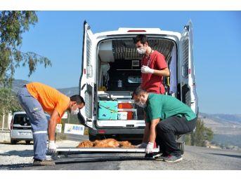 Büyükşehir Belediyesi'nden 'hayvan Ambulansı' Hizmeti