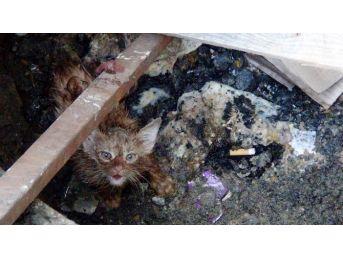 Vatandaşların Kedi Kurtarma Operasyonu