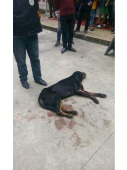 Rize'de Kavga Eden Köpekleri Ayırmak İsterken 2 Kişi Silahla Yaralandı