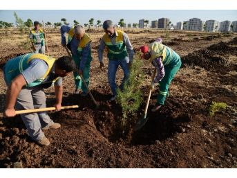 Tahir Elçi Kent Ormanı'na 25 Bin Ağaç Dikildi