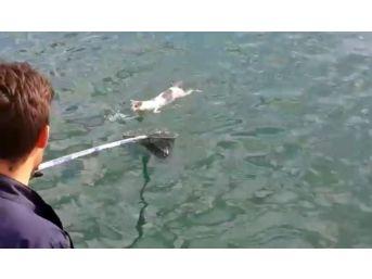 (özel Haber) Denizin Ortasında Mahsur Kalan Kedi Böyle Kurtarıldı