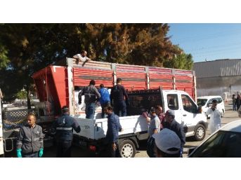 Foça'da Çiçek Hastalığı İçin 600 Torba Kireç Dağıtıldı