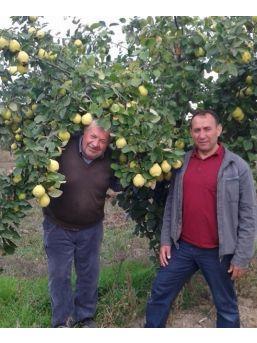 Hisarcıklı Çiftçiler: Ayva Bol Bu Kış Çok Sert Geçecek