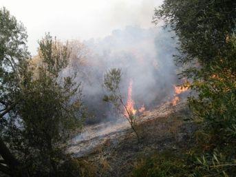 Çanakkale'de 3 Hektar Zeytinlik Yandı