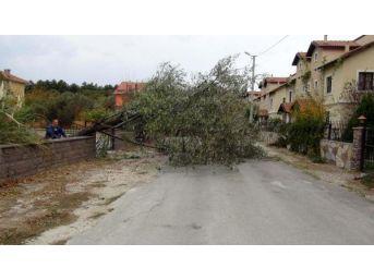 Çanakkale'de Lodosta Ağaçlar Devrildi