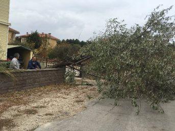 Fırtına Ağaçları Devirdi