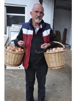 Çiftliğe Müzik Yayını Yapıp Yumurta Verimini Artırdı