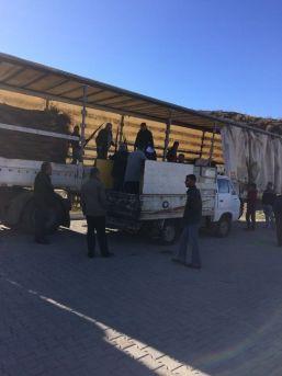 Sason'da 14 Bin Ceviz Fidanı Dağıtıldı