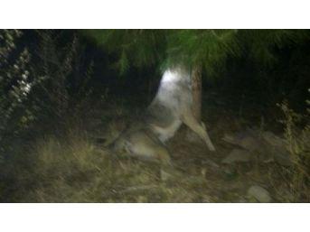 Manisa'da Köpeği Ağaca Asarak Öldürdüler