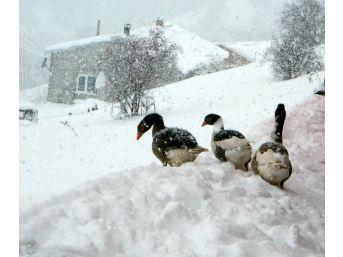 Kar Köy Yollarını Ulaşıma Kapattı