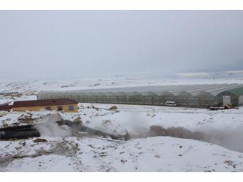 Sibirya Soğuklarında Sera Üretimi