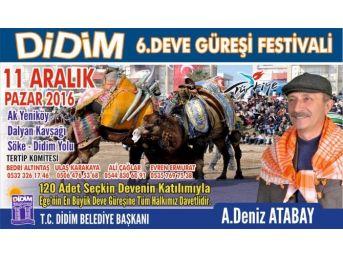 Didim Deve Güreşi Festivali 11 Aralık Pazar Günü Yapılacak