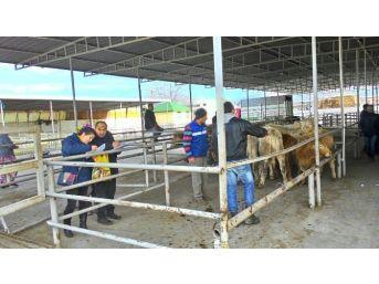 Genç Çiftçiler İşletmelerine Kavuştular