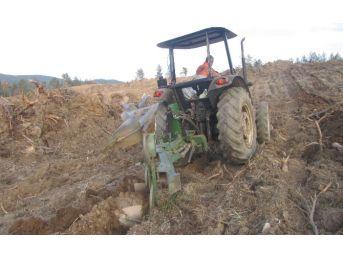 Kastamonu'da Orman Gençleştirme Çalışmaları Sürüyor
