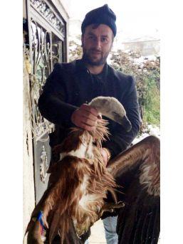 Rize'de Vücuduna Verici Bağlı Akbaba Ölü Olarak Bulundu