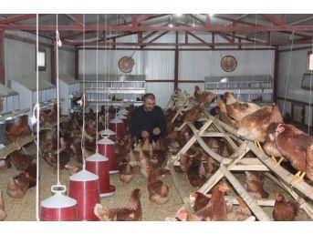 'genç Çiftçi' Projesinden Faydalandı Çiftlik Kurdu