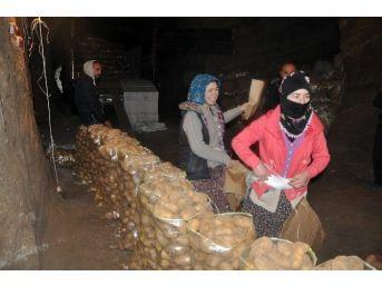 Sandıklı'da Üretilip Depolanan Patateslerin Sevkiyatı Başladı