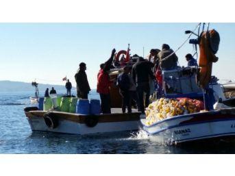İzmir'de Deniz Patlıcanı Gerginliği