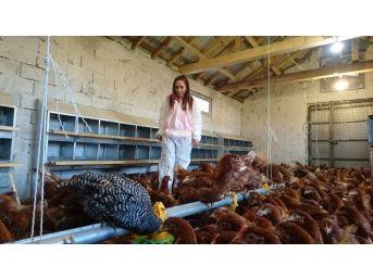 Eynesil'de Hibe Desteğiyle Tavuk Çiftliği Kurdu
