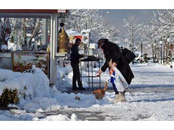 Sapanca'da Kar Güzelliği