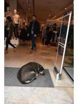 Giyim Mağazası Soğukta Kapılarını Sokak Hayvanlarına Açtı