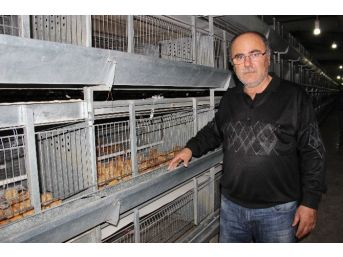 Üreticide Viyolü 6 Lira Olan Yumurta Marketlerde 12 İla 20 Lira Arasında Satılıyor