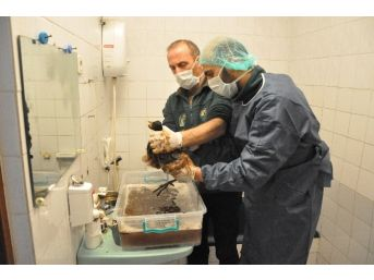 Katrana Bulanan Deniz Canlıları Darıca'da Tedavi Altına Alındı