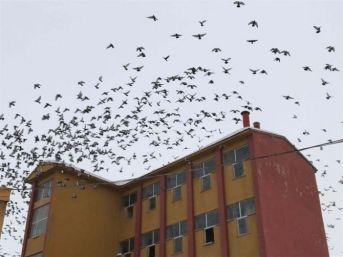 Aç Kalan Kuşlar Çareyi Yem Fabrikasına Sığınmakta Buldu
