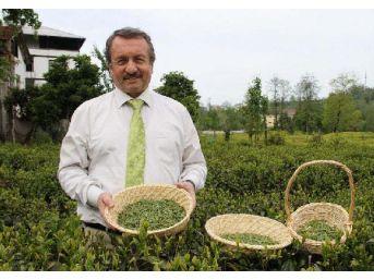 Doğu Karadeniz'De Üretilen Çay, 85 Ülkede Içiliyor