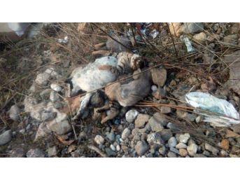 Samsun'da Sokak Hayvanlarının Ölümü Inceleniyor
