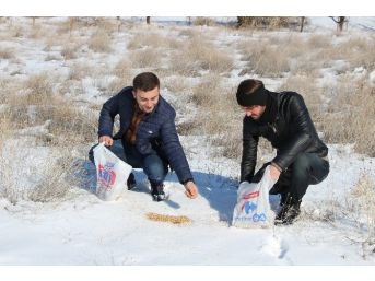 Kyk'lı Gençlerden Hayvanlara Yem