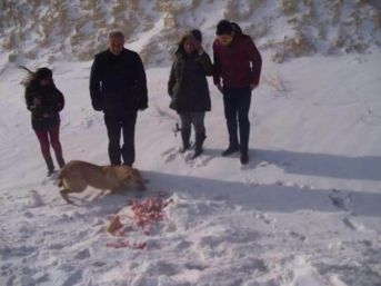 Gürün'de Yaban Hayvanları İçin Doğaya Yiyecek Bırakıldı