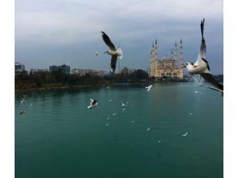 Adana'da Martıların Görsel Şöleni