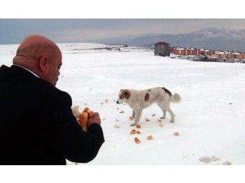 Tatvan'da Yaban Ve Sokak Hayvanları İçin Yem Bırakıldı