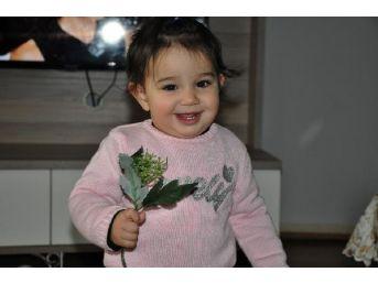 Yüz Nakli Olan Recep Sert'in Kızı Hira Yürümeye Başladı