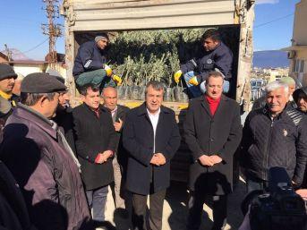 Mut Belediyesi Üreticiye 14 Bin Zeytin Fidanı Dağıttı