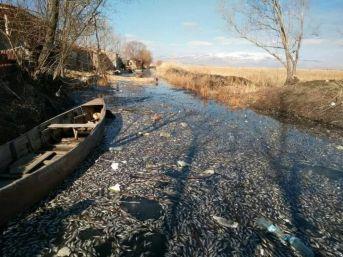 Eber Gölü'nde Yaşanan Toplu Balık Ölümleri
