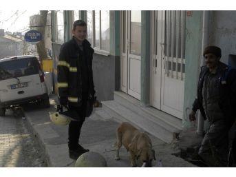 3 Gün Mahsur Kalan Köpeği İtfaiye Kurtardı