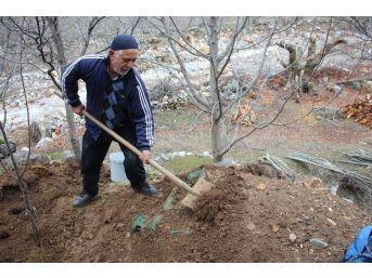 Sason'da Şalgam Toprak Altında Çıkarılmaya Başlandı